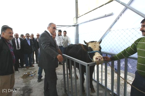 """CHP Milletvekili Öğüt, """"İthal Hayvanlara Domuz Yağlı Yem Veriliyor"""""""