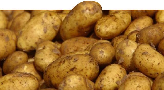 Zam şampiyonu patates