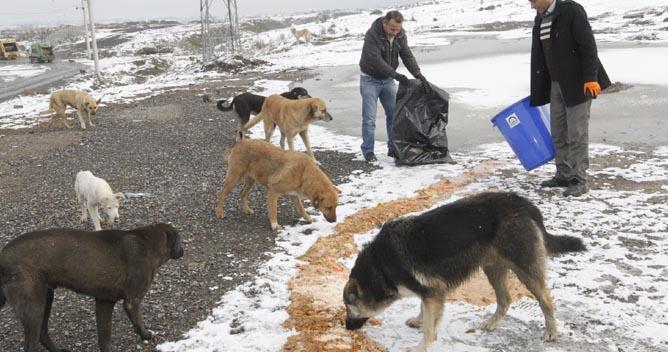 Ölü hayvanlar boş arsalara atılıyor