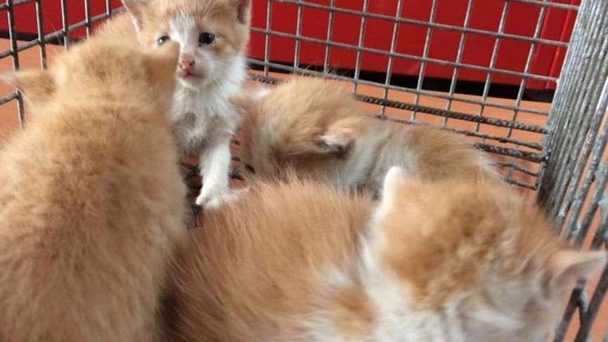 Yalova itfaiyesi yaramaz 4 kedi yavrusu için seferber oldu