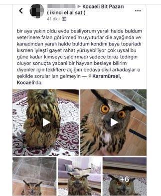 Baykuşu sosyal medyada satışa çıkardı