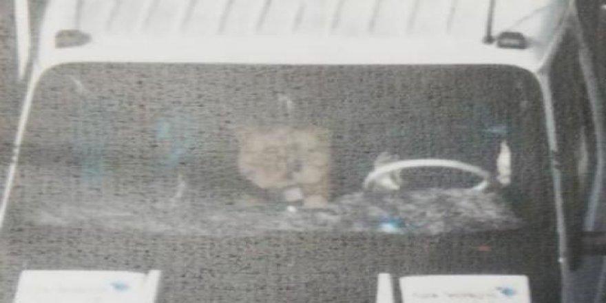 ÇAYIROVA: Kablo hırsızları güvenlik kameralarına yakalandı