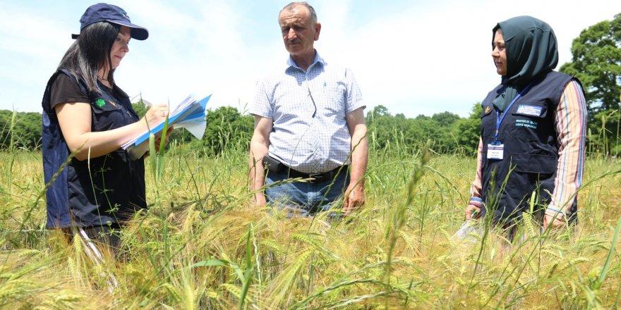 Çiftçilere tohum desteği