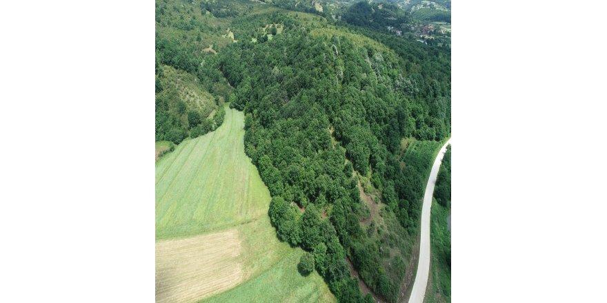 Taş ocağı için 5 bin ağaç kesilecek