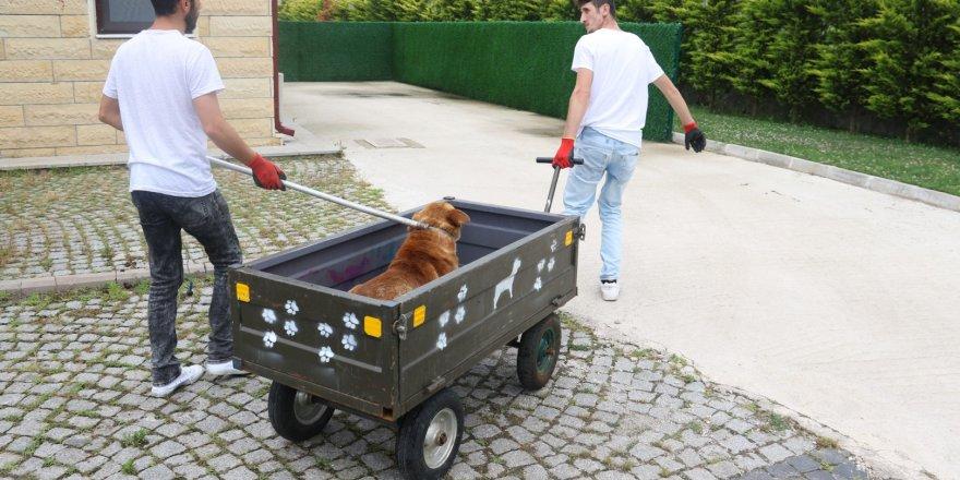 Sokak köpeklerine sağlık denetimleri