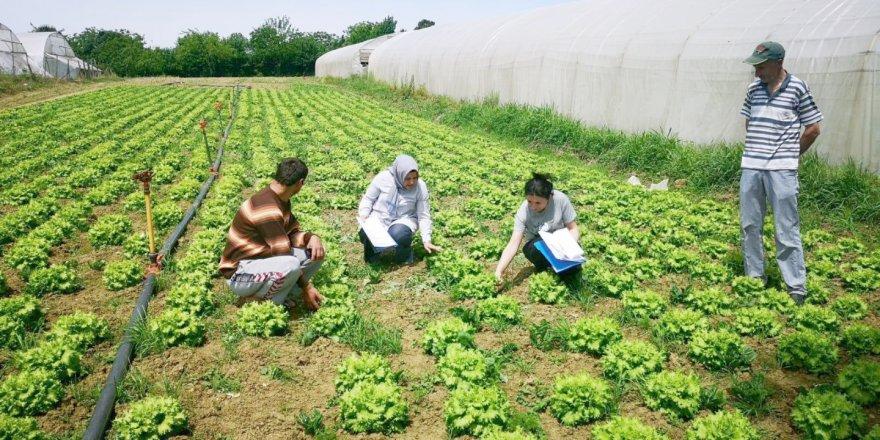 Çiftçilere destek veriliyor