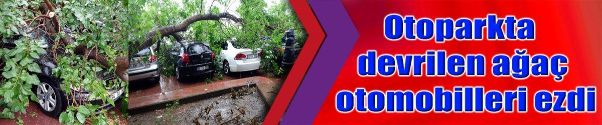 Otoparkta devrilen ağaç otomobilleri ezdi