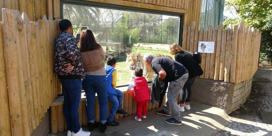 Hayvanat bahçesinde kış hazırlıkları