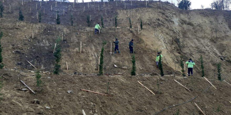 Toprak kayması yaşanan arazi ağaçlandırıldı