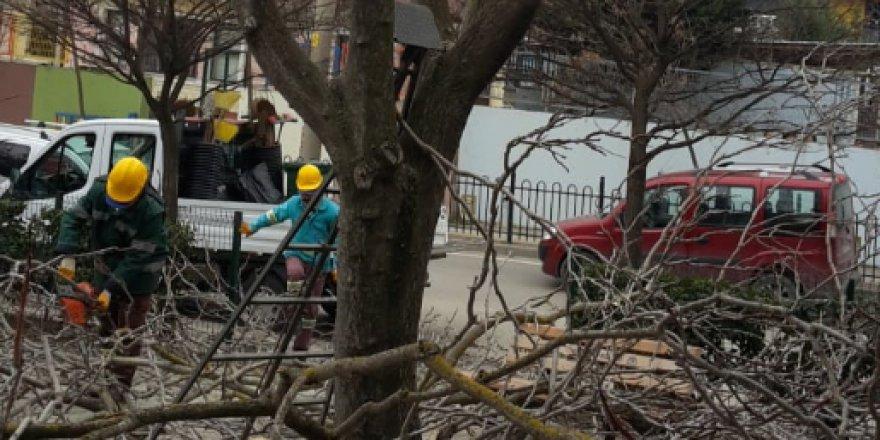 Ağaçlara bahar bakımı