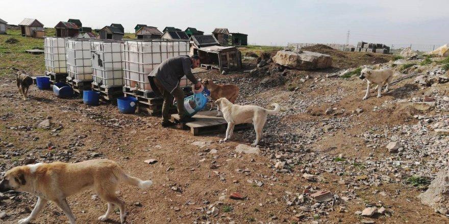 Dilovası Belediyesi Sokak hayvanlarını unutmadı