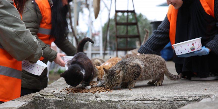 Sokak hayvanlarına mama dağıtılıyor