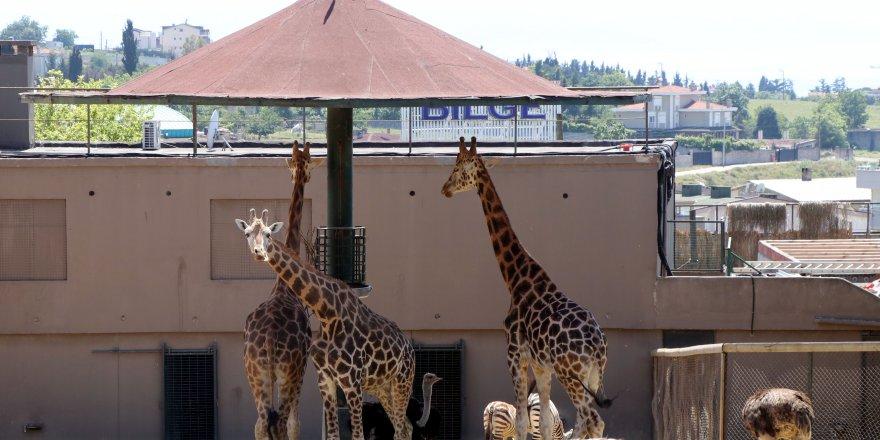 Darıca Faruk Yalçın Hayvanat Bahçesi  kapılarını açtı