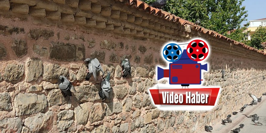 Tarihi külliyenin duvarını yiyorlar