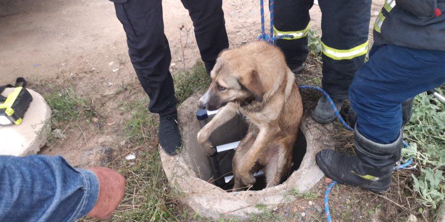 Kuyuya düşen köpeği itfaiye ekipleri kurtardı