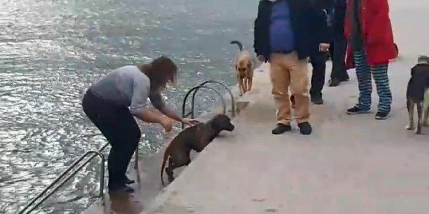 Boğulma tehlikesi geçiren  köpeği kadın veteriner kurtardı