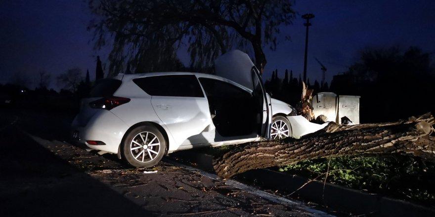 Köpeğe çarpmamak için ağaca çarptı!