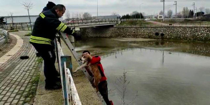 Dereye düşen 2 köpek kurtarıldı