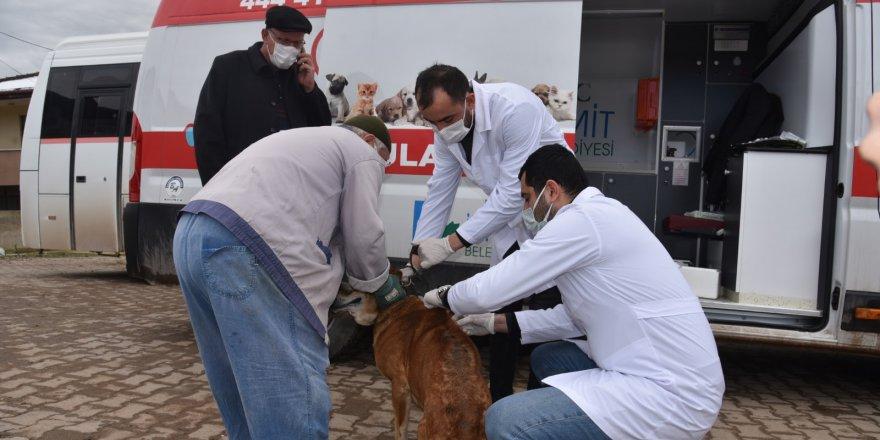 Köylerde sokak hayvanları aşılanıyor