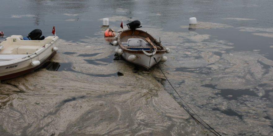 Eskihisar'da deniz salyası etkisini sürdürüyor
