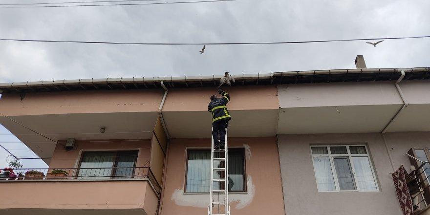 Ayağı çatıya sıkışan martıyı itfaiye kurtardı