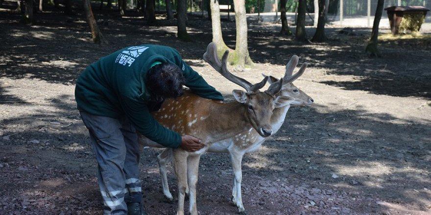 Yaralı yabani hayvanlar Ormanya'da emin ellerde
