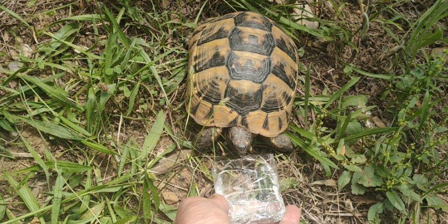 Bitkin halde bulduğu kaplumbağaya su içirdi