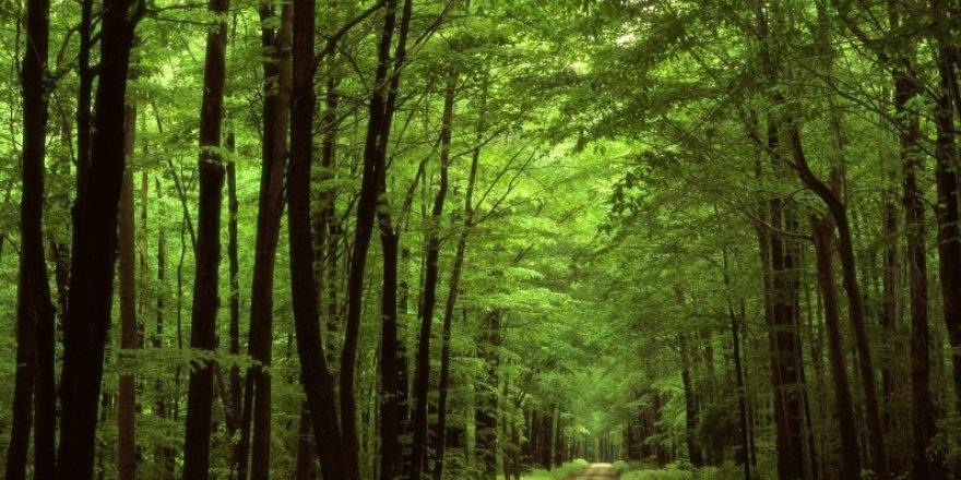 Kocaeli'de ormanlık alanlara girmek yasaklandı