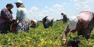 Doç. Dr. Serdal Bahçe, ekonomiyi BirGün'e değerlendirdi: Enflasyon yoksulu yıkıyor