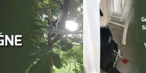 50 kedi uyuşturucu iğne toplatıldı