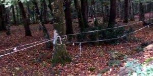 Polisten Belgrad Ormanı'nda 'Kaşıkçı' araması