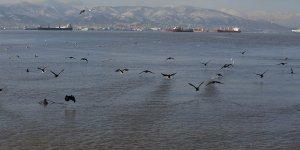 Kocaeli kuşların yeni cenneti