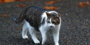 VAHŞET:  Kediyi bacaklarını keserek öldürdüler