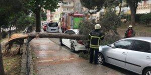 Ağaç otomobillerin üzerine devrildi