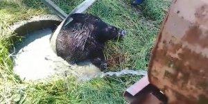 SU DOLU KUYUYA DÜŞTÜ:  Yaban domuzunu itfaiye kurtardı