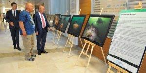 İzmit Körfezi'nin sualtı yaşamı Ankara'ya taşındı
