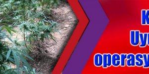 KOCAELİ: Uyuşturucu operasyonları sürüyor