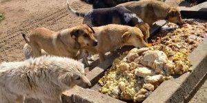 Artan yemekler sokak hayvanlarına
