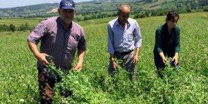 YÜZDE 50 HİBELİ: Çiftçilere tohum desteği