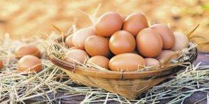 Yumurta, Anne Sütünden Sonra En Zengin Protein Kaynağı