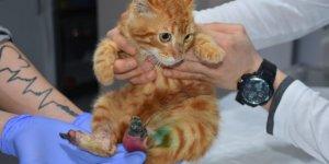 Ayakları yanmış kedi tedavi edildi