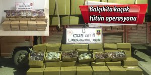 Balçık'ta kaçak tütün operasyonu