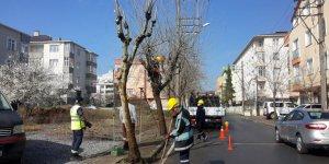 Gebze'de ağaçlar budanıyor