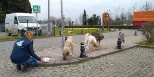 Büyükakın, sokak hayvanlarını unutmuyor