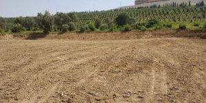 Dilovası'nda yeşillik alanlar yok ediliyor
