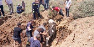Gebze'de inek kurtarma operasyonu