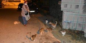 6 yıldır sokak hayvanlarının karnını doyuruyor