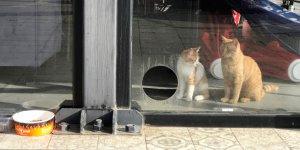 Kafeterya kedilerin yuvası oldu
