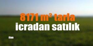 8171 m² tarla icradan satılık