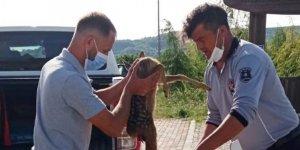 Yaralı karaca yavrusu tedaviye alındı